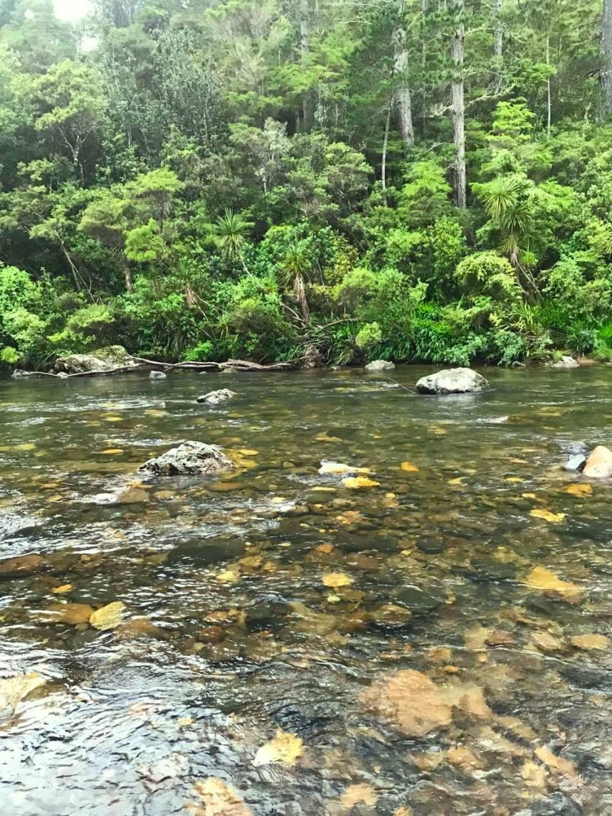 bush and river